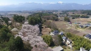 おまけ:霞む南アルプスと地元「谷戸城趾」の桜。(撮影は4/24)